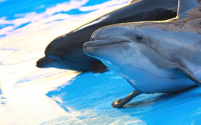 Дельфинарий Nemo, Харьков
