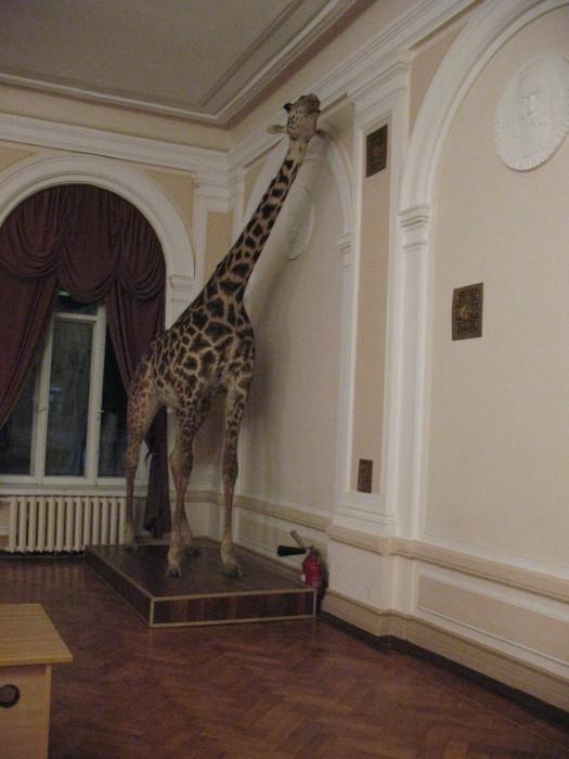 Музей природы, Харьков