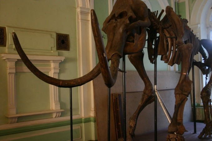 Музей природы Харькова