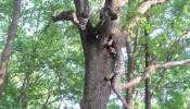 Змей Горыныч, краснокутский дендропарк