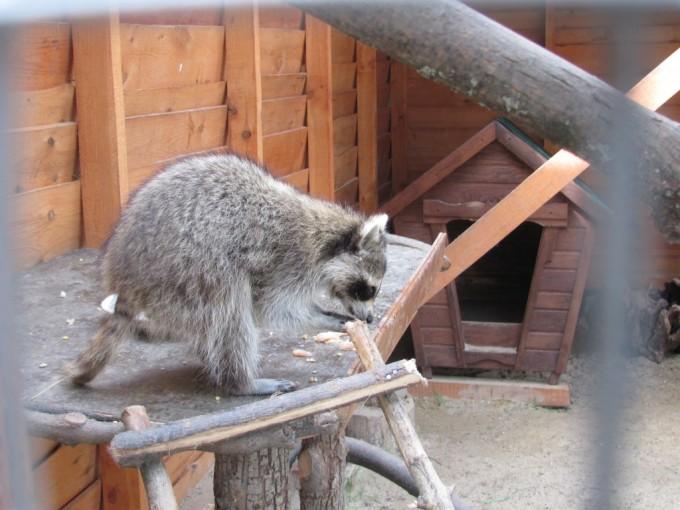 Зоопарк (экопарк) Фельдмана (20)