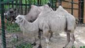 Зоопарк (экопарк) Фельдмана (18)