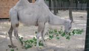 Зоопарк (экопарк) Фельдмана (19)