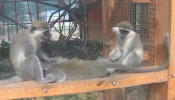 Зоопарк (экопарк) Фельдмана (15)