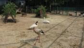 Зоопарк (экопарк) Фельдмана (14)