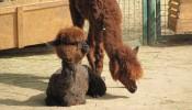 Зоопарк (экопарк) Фельдмана (11)