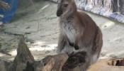 Зоопарк (экопарк) Фельдмана (10)