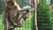 Зоопарк (экопарк) Фельдмана (9)