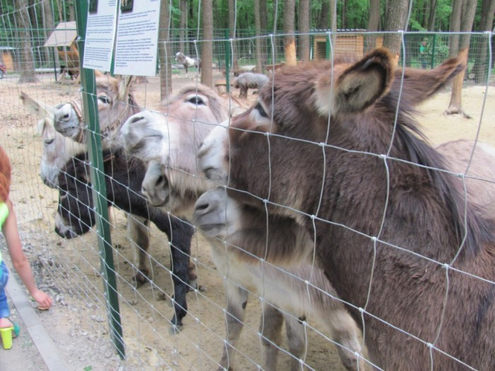 Зоопарк (экопарк) Фельдмана (6)
