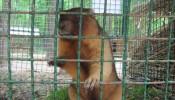 Зоопарк (экопарк) Фельдмана (5)