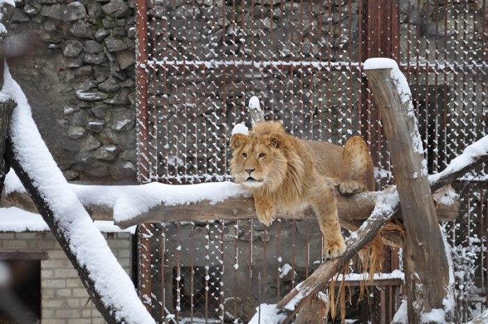 Зоопарк в Харькове зимой