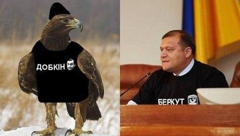 добкин-беркут