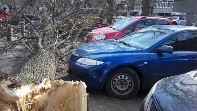 Дерево повредило авто