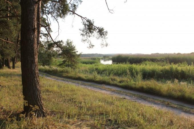 лес_Харьковщина