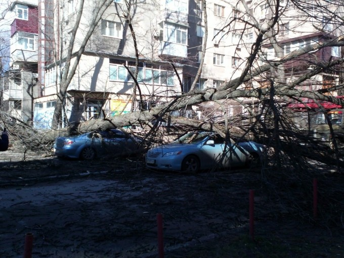 поваленные_деревья