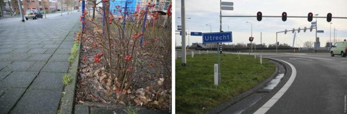 Нидерланды: клумбы на тротуарах и газоны на шоссе.