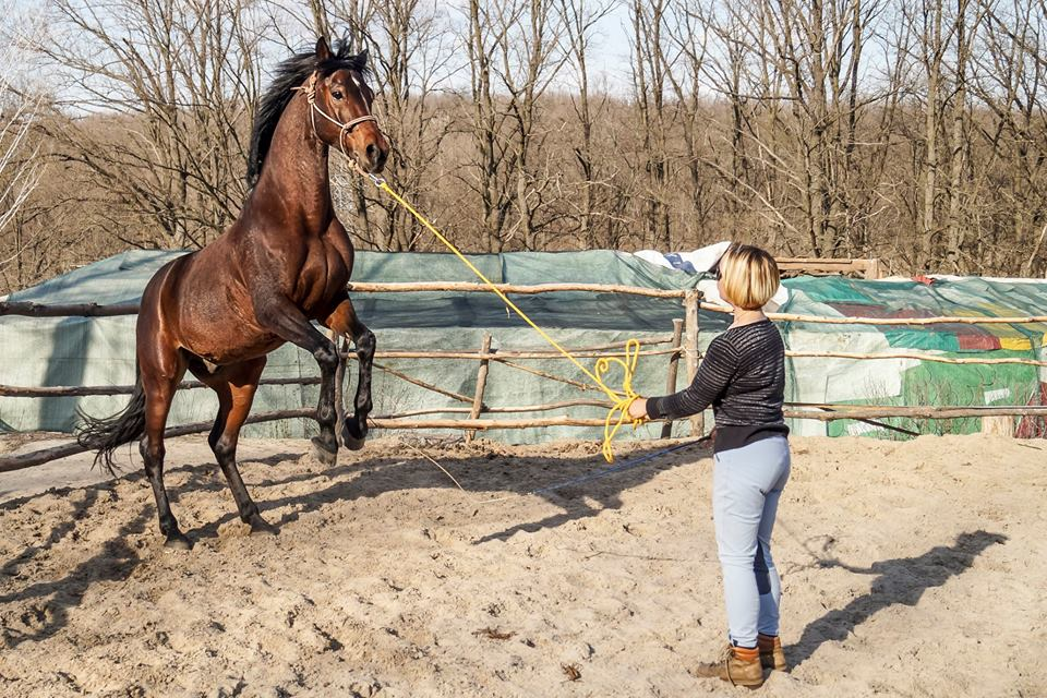 Необычные профессии Харькова: Воспитатель лошадей