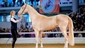 Воспитатель лошадей