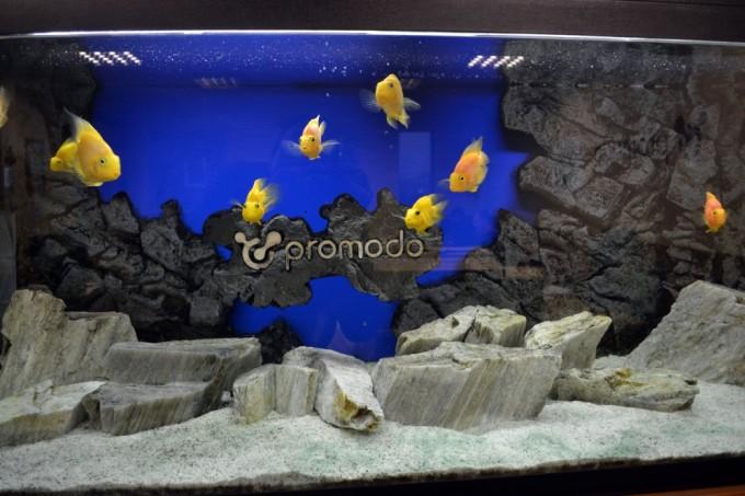 В офисе компании Promodo