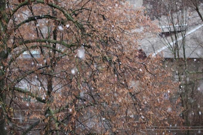 Фото: www.sq.com.ua