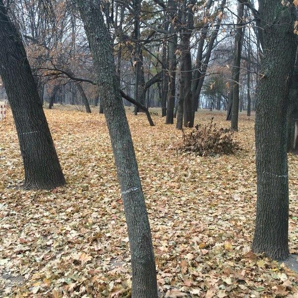 Отмеченные деревья в саду имени Шевченко. Фото: vk.com/h_kharkov