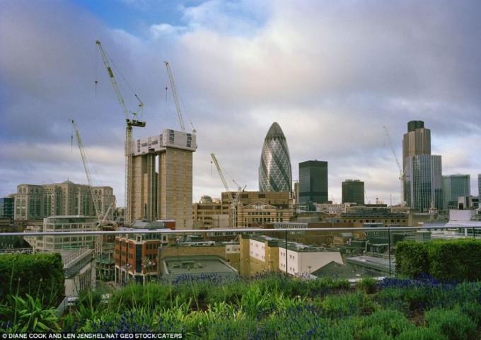 Центр Лондона. Полевые цветы прямо на крыше. Фото: europe-today.ru