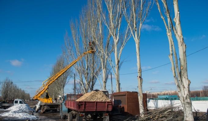 Кронирование деревьев. Фото: пресс-служба Харьковского городского совета.
