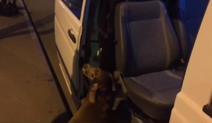 Собака по кличке Макс вынюхивает наркотики. Кадр из видео пресс-центра Государственной пограничной службы Украины.