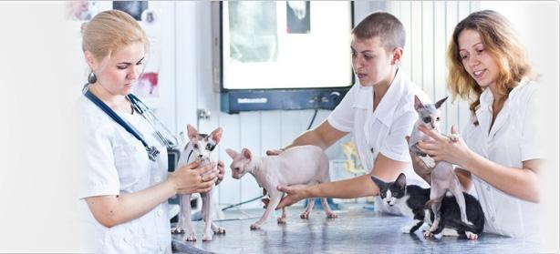 ветеринарная клиника на улице поликарпова: