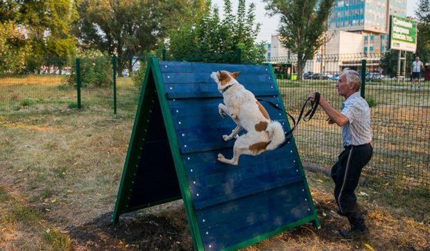 Площадка для собак Салтовка