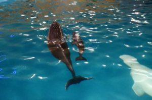 дельфин немо