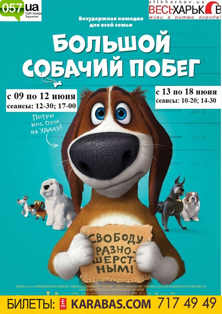 Большой собачий побег Харьков
