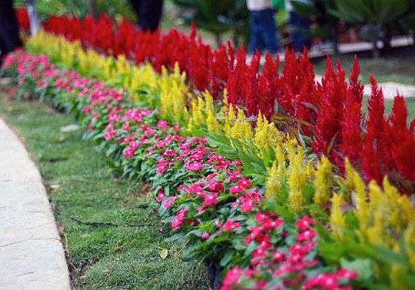цветы на участке возле дома