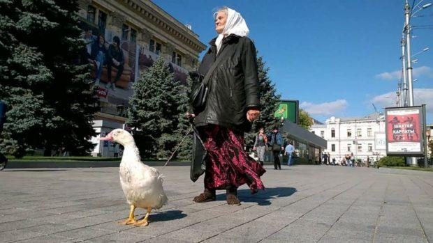 Бабушка с гусем в Харькове