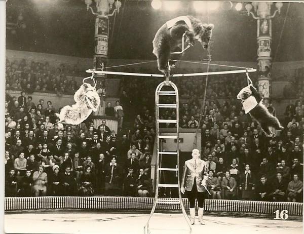 Кузница цирковых талантов