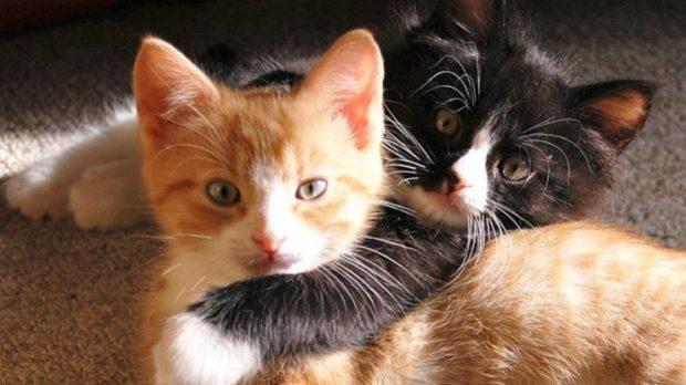 Кернесу предлогают признать уличных котов частью экосистемы Харькова