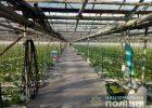 На овощной фабрике под Харьковом женщина получила ожоги