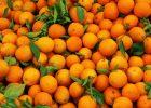 В Харьков не пустили крупную партию апельсинов