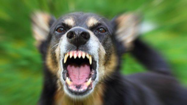 В Харьковской области собака покусала пятилетнюю девочку: ребенок в реанимации
