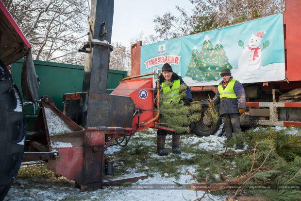 В Харькове после праздников собирают и утилизируют елки