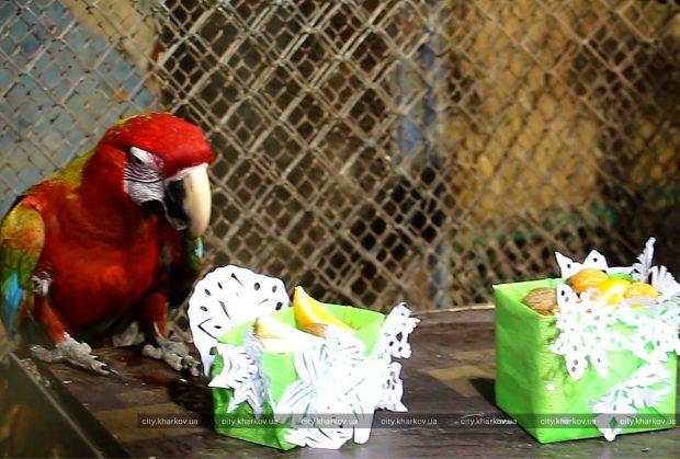 Харьковский зоопарк подготовил подарки для своих обитателей