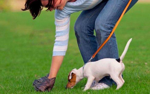 Харьковчанка хочет заставить владельцев собак убирать за ними на улице