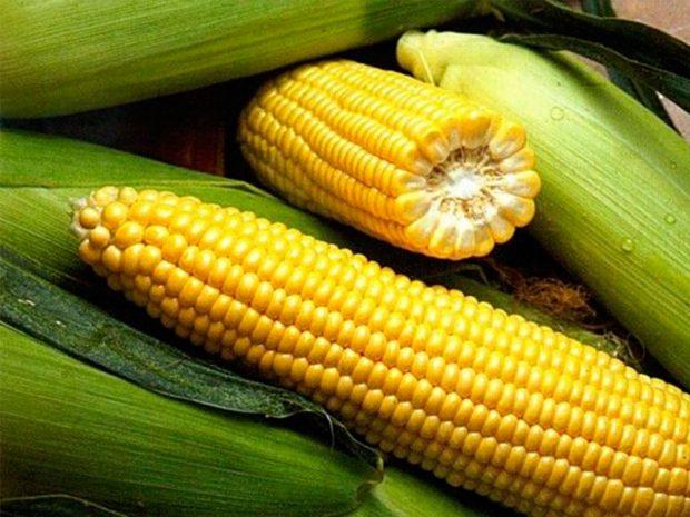 На Харьковщине будут судить мужчину, который самовольно засеял 97 га госземель кукурузой