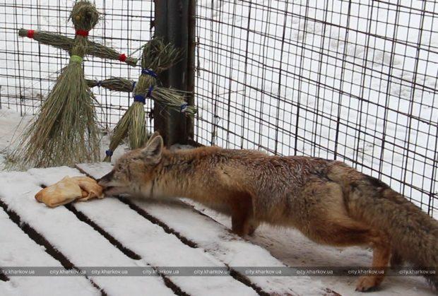 Обитатели зоопарка празднуют Масленицу