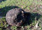 Под Харьковом хозяйская собака нашла во дворе останки человека