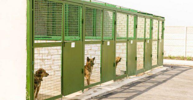 В Харькове группа неизвестных атаковала приют для животных, чтобы забрать собаку