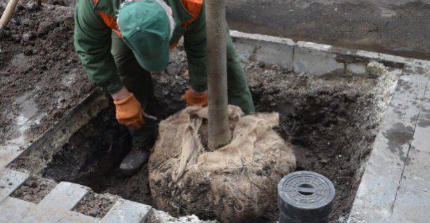 Весной в Харькове высадят более 900 деревьев