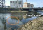 В реке в центре Харькова нашли тело молодой женщины