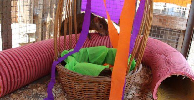 Обитатели Харьковского зоопарка отметили Пасху