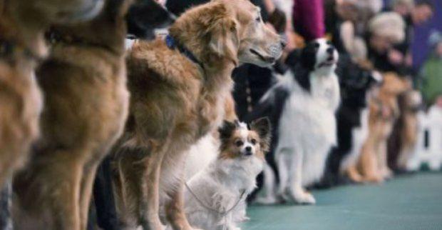 В Харькове пройдет международная выставка собак